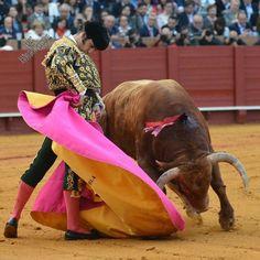#spainbullfighting