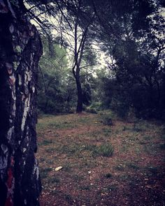 ◐◑ - I love to have walk in creepy forest…  Happy New...