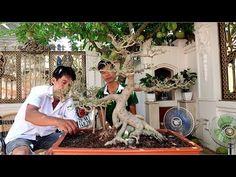 Hoàn thiện tác phẩm bonsai - YouTube