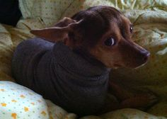 Brilliant! Instant Dog Sweater | BlogHer