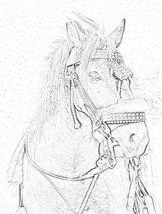 Troian Sherrilyn Kenyon Books, Dark Hunter, Film Music Books, Hunters, Beautiful World, Novels, Sketches, Horses, Album