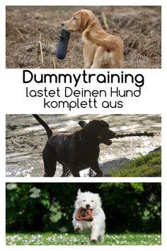 Dummytraining ist vielseitig und bietet auch einem Mensch-Hund-Team, dass diese Art des Trainings nur in der Freizeit und aus Spaß betreiben möchte, viele Möglichkeiten. #hund #beschäftigung #hundesport #hundetraining