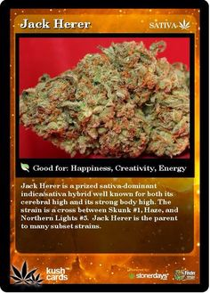 Jack herer this tastes so amazing! Cannabis News, Medical Cannabis, Cannabis Oil, Buy Cannabis Online, Buy Weed Online, Marijuana Plants, Marijuana Art, Weed Strains, Cbd Oil For Sale
