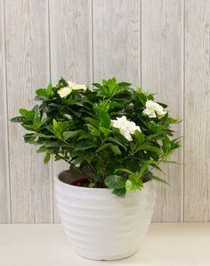 Planter Pots, Landscaping, Decoration, Medicinal Plants, Decor, Yard Landscaping, Decorations, Landscape Architecture, Decorating
