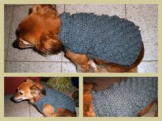 crochet pet sweaters free patterns | Dog Crochet Sweater
