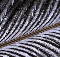 feathers #TopshopPromQueen