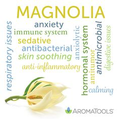 Essential Oil Spotlight: Magnolia Magnolia (Michelia alba, or Magnolia alba) essential oil is steam distilled from the flower of the plant. The sweet aroma is a subtle blend of floral, fruity, and herbaceous tones. Essential Oils For Inflammation, Essential Oils For Pain, Frankincense Essential Oil, Essential Oil Diffuser Blends, Essential Oil Uses, Young Living Essential Oils, Arthritis, Perfume, Doterra Essential Oils