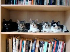 Be sure to shelf your cats separately to ensure the life of your books.