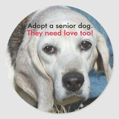 Adopt a senior dog. They need love too! Classic Round Sticker  beagle puppy training, beagle adult, bad puppy #cats #catmania #animals, back to school, aesthetic wallpaper, y2k fashion