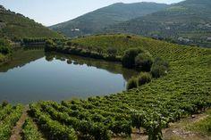 Gestores Ibéricos analisam desafios do turismo sustentável no Alto Douro Vinhateiro | CCDRN