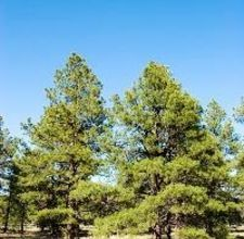 Food Plants For Under The Pine Trees Lynn S Plantings