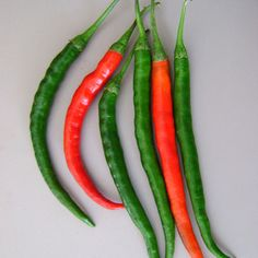 """Kung Pao Pepper. 10,000 Scoville Units. Capsicum annuum. Long, skinny red pepper similar in appearance to the cayenne. The Kung Pao Pepper is a fairly recently introduced hybrid with excellent mildly hot flavor and is often used in Thai and other Southeast Asian cuisine. Fruits are very long, to 6-9"""", dark red in color, with thin walls. Plants are fast-growing and vigorous. This medium-hot Asian hybrid Chile Pepper can be used green or red, fresh or dried"""