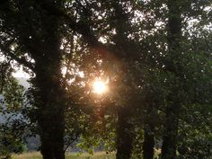 Sunset thro the trees.#NantCelyn #TalesOfGlynHud #CaitlinswishStories