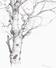 Tree Drawing sketches and tips. Tree Sketches, Drawing Sketches, Art Drawings, Sketching, Realistic Drawings, How To Draw Realistic, Tree Pencil Sketch, Pencil Trees, Flower Drawings
