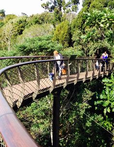 TREETOP WALK: It may seem touristy to look for a walkway on top of the trees, but for kids, it's amazing to be way up high like that, especially as they spend their little worlds down low and looking up! Have everyone bring snacks and drinks and have a picnic at the highest point!