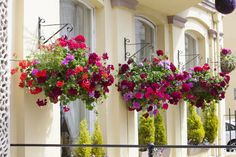 a great example of superb curb appeal using flowers and their colors to attract guests!  (And bring them back year after year!!)