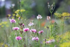 View top-quality stock photos of Meadow Flowers. Find premium, high-resolution stock photography at Getty Images. My Photos, Stock Photos, Meadow Flowers, Image Collection, Royalty Free Images, Autumn, Plants, Photography, Photograph