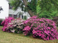 When to prune plants