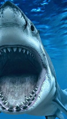 look inside the mouth of a shark up close..