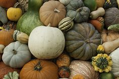 Gourds by Greg Thiemeyer Photography