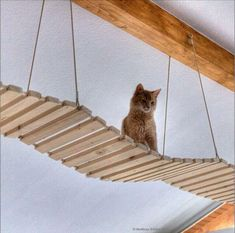 Building instructions for a (cat) suspension bridge parts)-Bauanleitung für eine (Katzen-)Hängebrücke Teile) Yes, I know: the photo is beautiful … but that's not the point here … 🙂 Sometime when I have a photo of a self-made hanging … - Bb Chat, Cat Run, Cat Playground, Cat Enclosure, Pet Furniture, Cat Accessories, Diy Stuffed Animals, Cat Toys, Cat Life