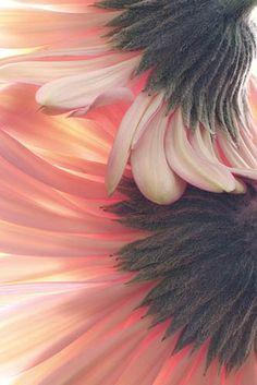 ... / Cuerpo de piel, de musgo, de leche ávida y firme. / Ah los vasos del pecho! Ah los ojos de ausencia! / Ah las rosas del pubis! Ah tu voz lenta y triste! / .. /// - de Poema 1, Veinte poemas de amor y una canción desesperada - Pablo Neruda.