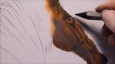 Kay Witt HORSE painting DEMO w/pastels