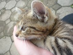 Relax, Cats, Animals, Gatos, Animais, Animales, Kitty Cats, Animaux, Animal