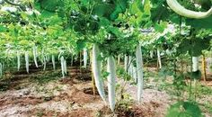 Image result for kerala vegetables