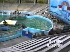 Lolita Slave to Entertainment animal right documentary (2003)