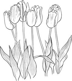 Seven Tulips Coloring Page Tulip Painting Silk Drawing Watercolor Paintings