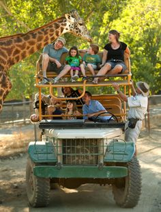 African safaris & Pricing. Ride in our open-aired safari jeep over rolling sonoma serengeti hills.