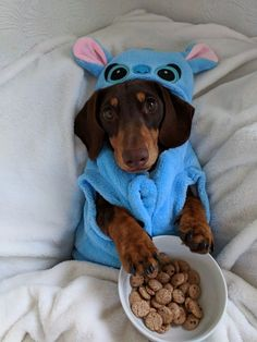 Find cute and funny costumes for sausage dogs, make your sausage dog even more adorable when dressed in a cute dachshund costume. Weenie Dogs, Dachshund Puppies, Pet Dogs, Pets, Doggies, Samoyed Dogs, Maltese Dogs, Baby Animals Pictures, Cute Animal Photos