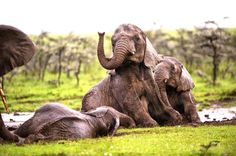 Mara Naboisho Conservancy | Kenya Safari | Naboisho Camp | Asilia Africa
