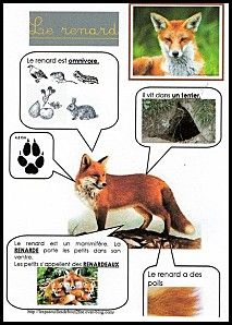 Printable page about le renard Animal Activities For Kids, Science For Kids, Science And Nature, Animals For Kids, Preschool Curriculum, Kindergarten, French Education, Animal Habitats, Animal Facts