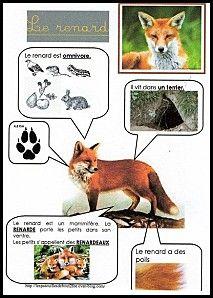 Une fiche documentaire bien synthétique sur le renard !