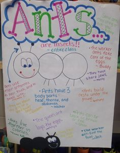 Mrs Jump's class: Ants in my Pants and a FREEBIE!