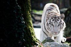 Photo du GEOnaute : JORIS Trouvez la meilleure assurance pour votre animal de compagnie grâce à ce comparateur en ligne