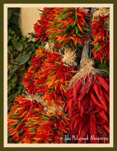 Vibrant and Spicy New Mexico Chili and the beautiful creations called Chili Ristra...