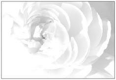 #FRACT_ALL ____Διήγημα: «Το λευκό επέστρεψε»  Της Ευδοκίας Τάλια http://fractalart.gr/evdokia-talia/