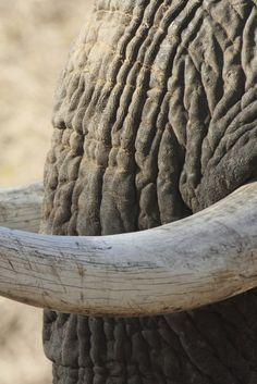 #AFRICA #SWD #GREEN2STAY <i>Illicit Ivory</i>: A Film Worth Watching