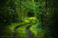 숲, 푸른 나무, 도로, 신선한, 빛, 단풍,
