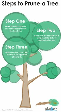 For more information on pruning trees and shrubs, go to http://www.planitdiy.com/how-to/lawn-garden/how-to-prune-trees-and-shrubs/