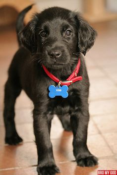 first impression is a black lab, but the feathering around the ears says mutt. Probably just a black lab puppy.