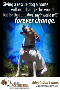 Adopt. Don't shop. Giving a rescue dog a home will not change the world... but for that one dog, their world will forever change.