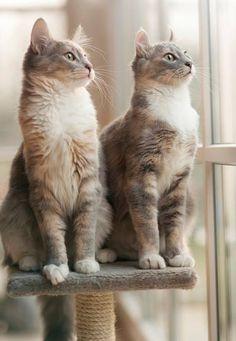 Beautiful kitties