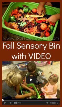 Fall Sensory Bin with a video!