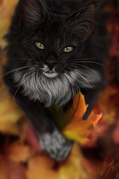 It's a beautiful cat and mesmerizing...