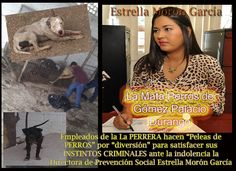 #SeEsterilizaNoSeMata La Corrupción y la Indolencia en la Perrera de Gómez Palacio Durango no tiene madre ¿En que se gasta el dinero la corrupta Estrella Morón García?