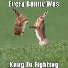 You know the song everybody was kung fu fighting? Well know every BUNNY was kung fu fighting! Humor Animal, Funny Animal Memes, Cute Funny Animals, Funny Animal Pictures, Funny Memes, Funny Easter Memes, Animal Puns, Happy Easter Meme, Cat Memes